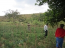 Tomato field funded by Kwenderana Partnership