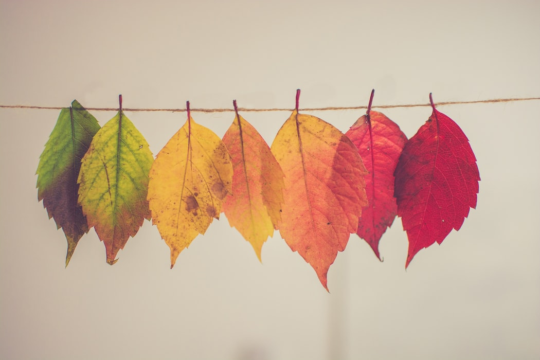 Image of coloured leaves on a hanging garland