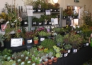 One of the many stands at the 2010 Plant Fayre
