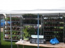 Racks of plants waiting to be sold