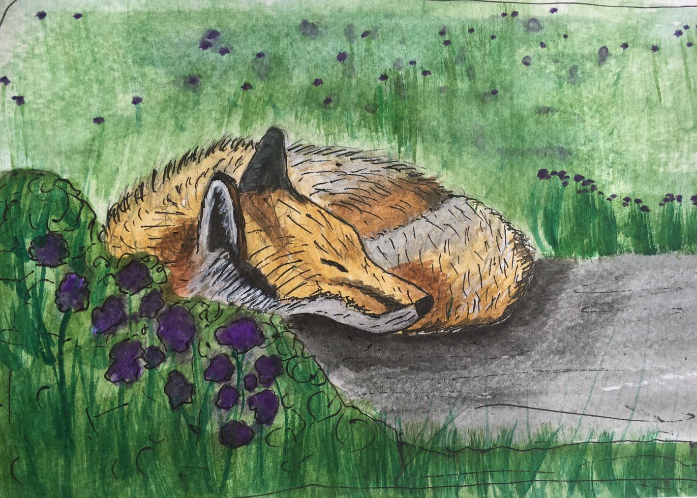 Fox dozing