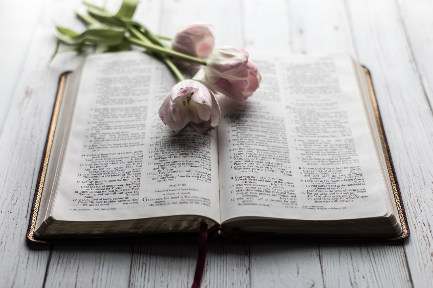 Open bible and tulips