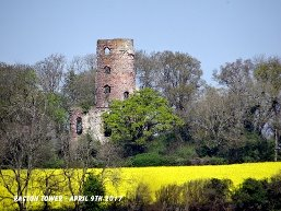 Racton Ruin surrounded by trees and a yellow meadow in the foreground