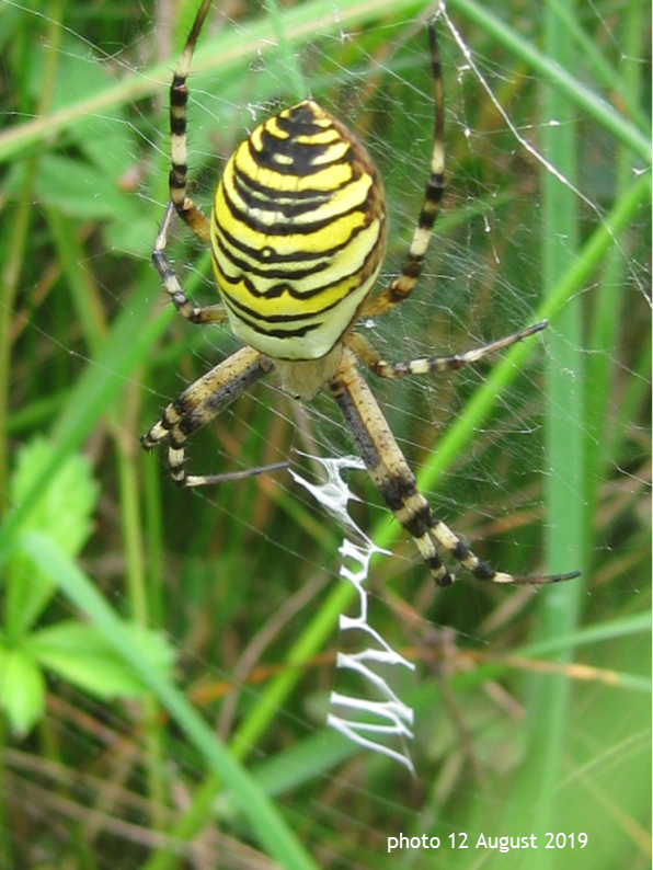 A close up of a spiderDescription automatically generated