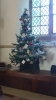 Choir's tree