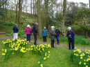 Church holiday at Parcevall Hall April 2019 - a lovely walk enjoying the Spring daffodils