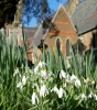Snowdrops are a welcome assurance that the brighter days of spring are on their way