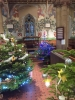 Click here to view the '4th Christmas Tree Festival' album