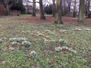 Snowdrops at the beginning of Lent