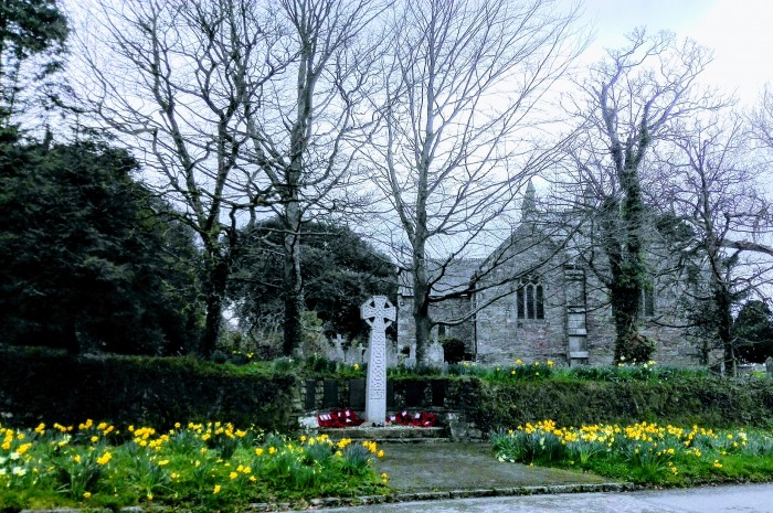 Daffodils at St Piran's