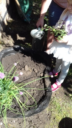 child planting herbs
