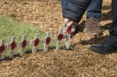 Blessing service for the new Hatfield House Field of Remembrance