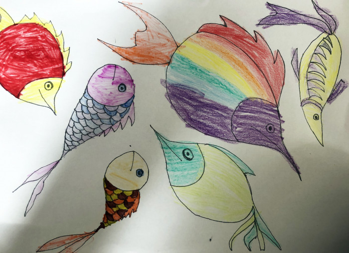 Fish coloured by the Viney family