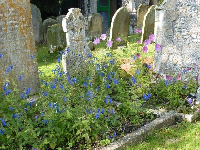 A grave planted with salvias
