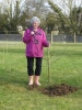 Planting a commemorative tree