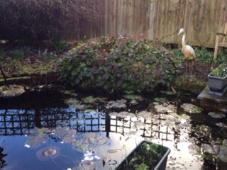 The pet heron guarding the pond!