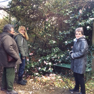 Claire and friends admiring the camellias.