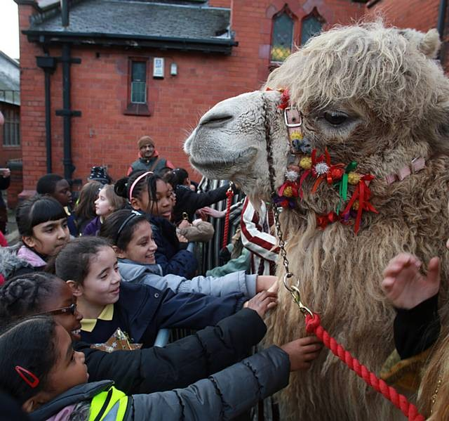 School children meet the camels