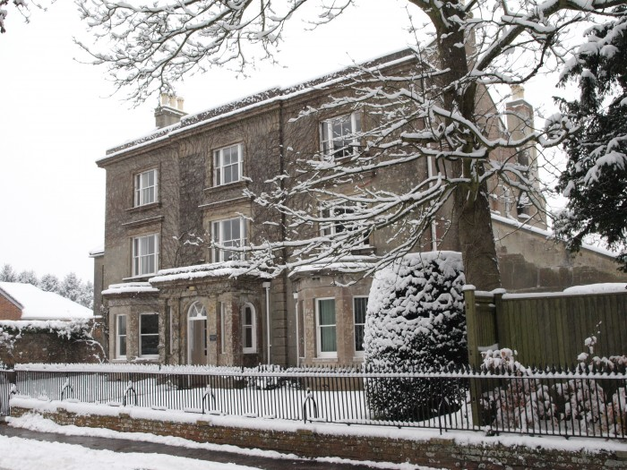 The Elms in Snow
