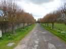 The drive lined by lime trees