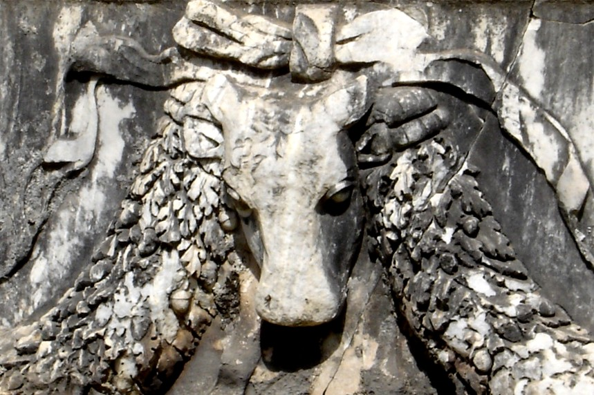 Garlanded bull at Ephesus