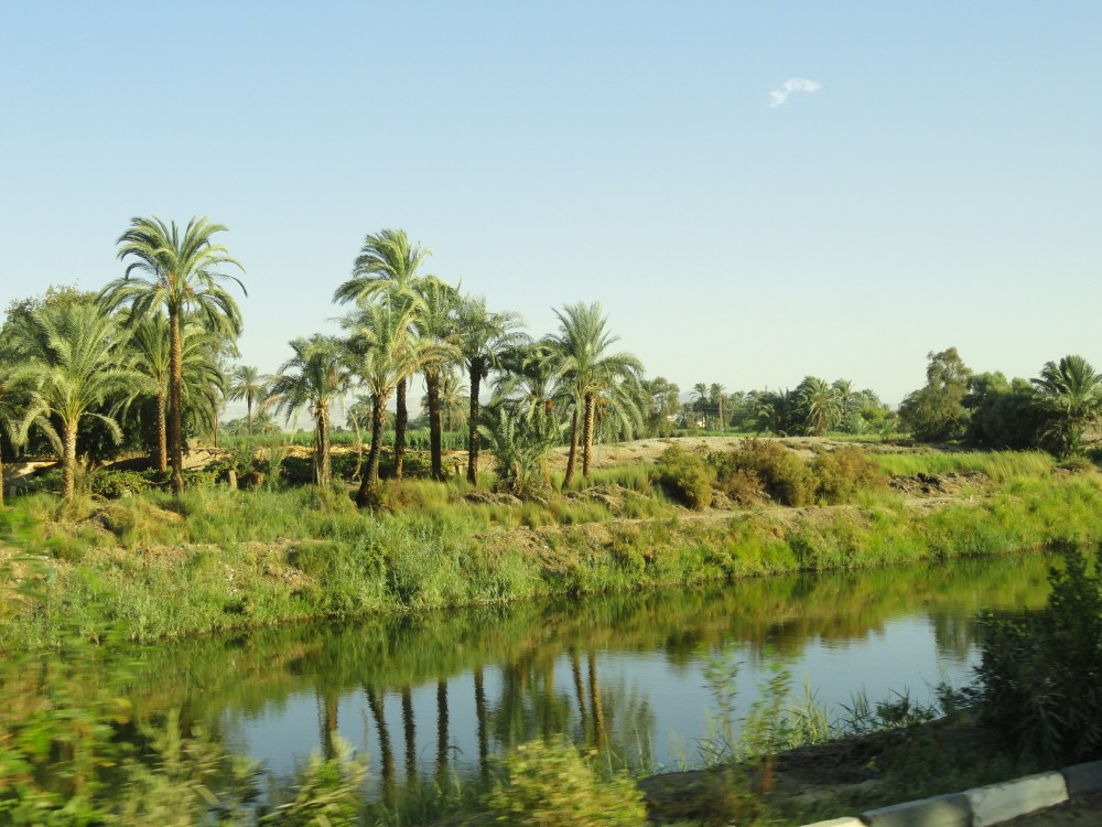 Fertile land in the Nile valley