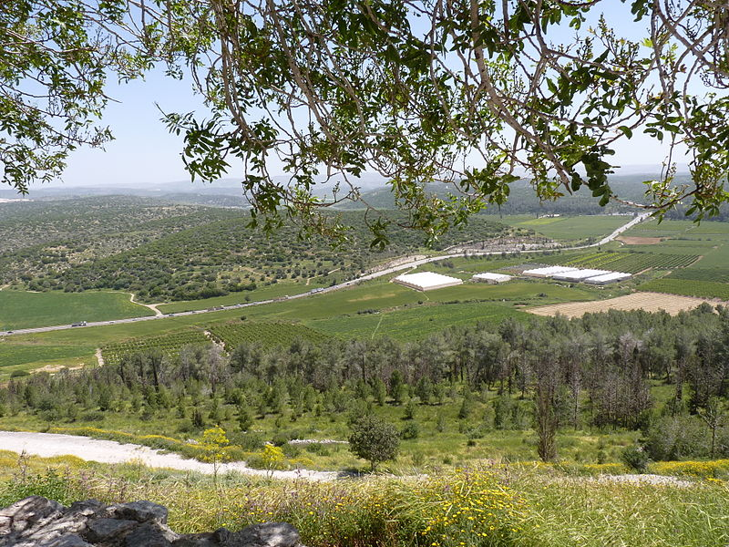 The Elah Valley near Beth Shemesh