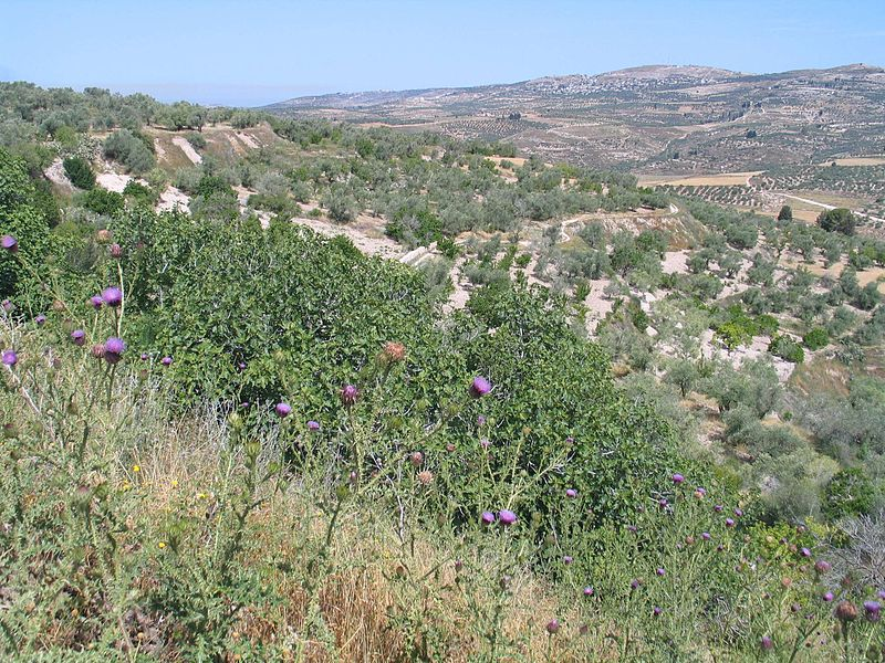 Shomron National Park - site of Samaria (Bukvoed)