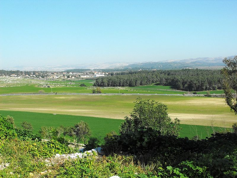 The Shephelah or Judean foothills (Ilana Shkolnik)