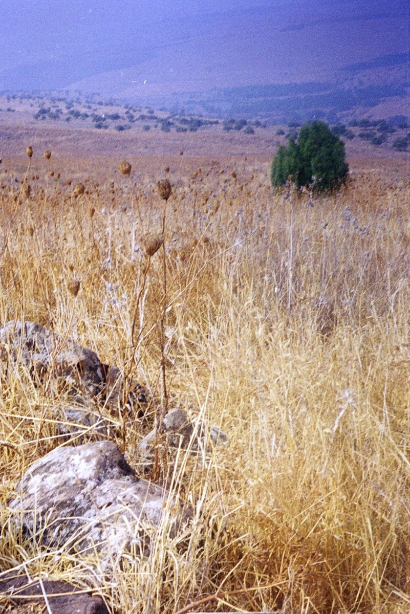 Hillside in Galilee