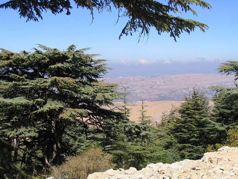 Cedars of Lebanon in the Barouk Forest (Yhabbouche)