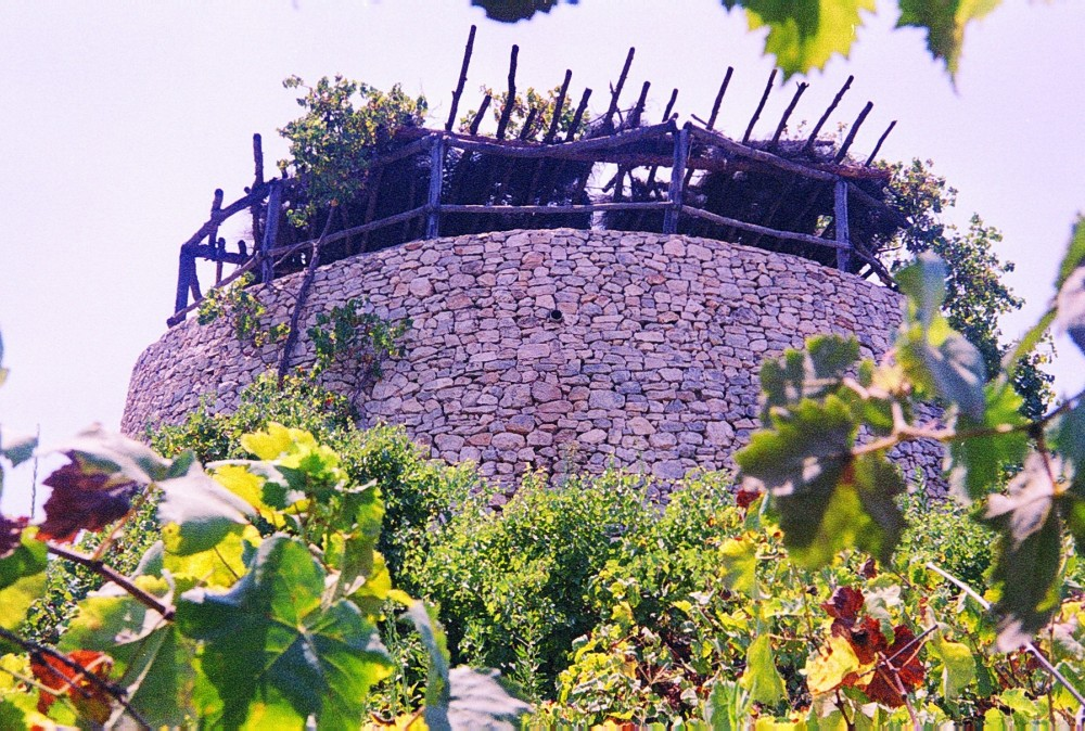 A watchtower in a vineyard