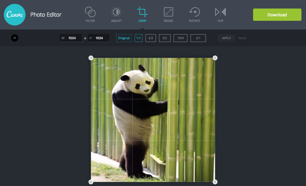 Image of screen capture from Canva showing panda bear