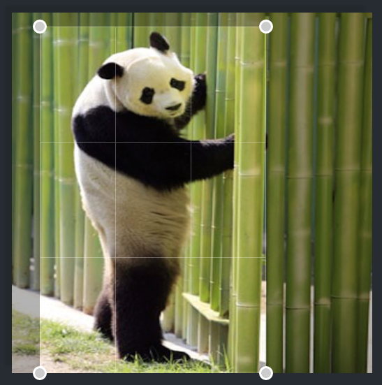 Image of panda bear