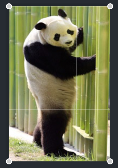 Image of panda in editing mode