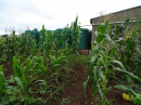 Improved cultivation in a community garden