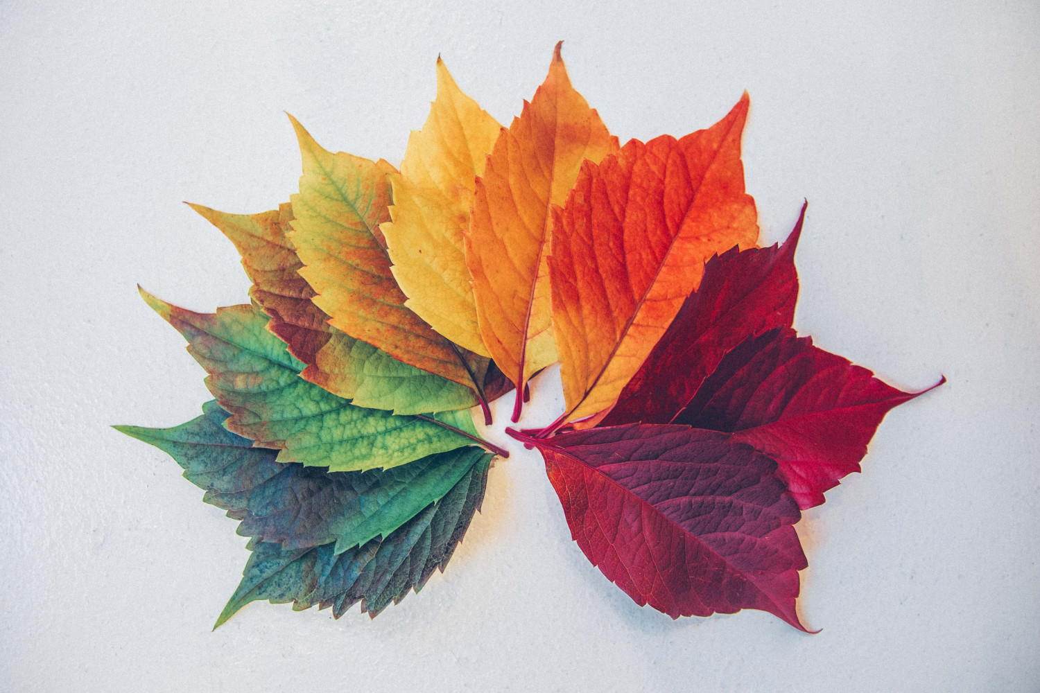 Image of a group of leaves in various colours