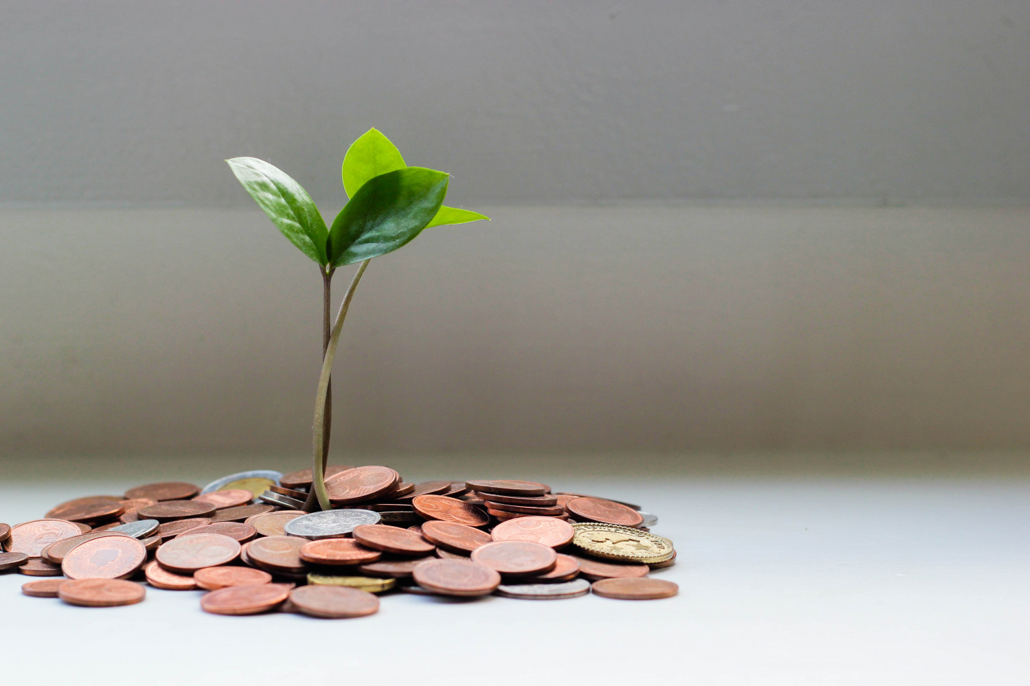 Image of a plant growing out of a stack of coins